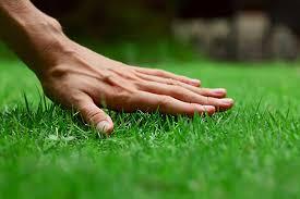 hand lawn